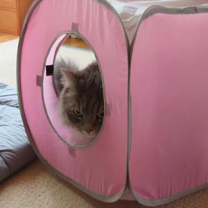 りゅうちゃんにまだらが使っていたトンネルをプレゼント☆