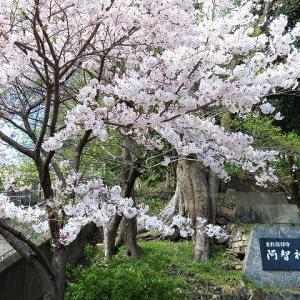 阿智神社・倉敷護国神社(御朱印あり)階段が結構ハードです!