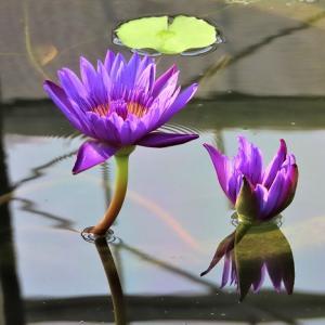 ブログ開設3周年の日☆ありがとうを大好きな蓮の花にのせて☆