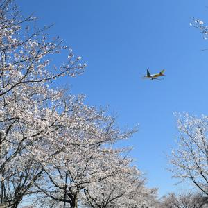With cherry blossoms 2019 Vol.1