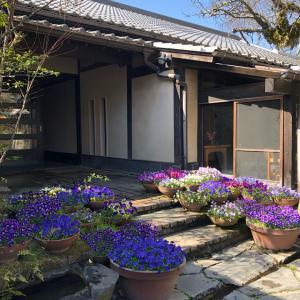 《閑話》湯布院と春の朝