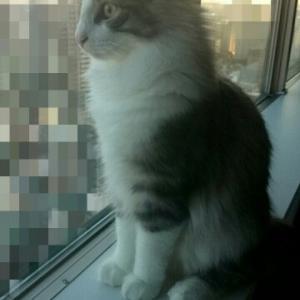 自宅警備猫