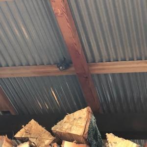 【蜂に刺された】薪棚によく建築される蜂の巣について