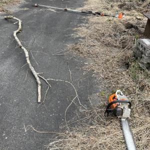 【雑木を切る】ツタを切らないと、木が倒れる時ヤバい