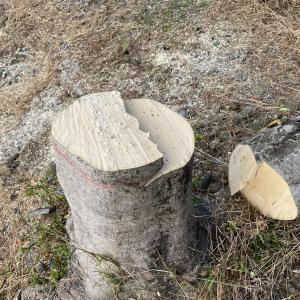 【伐採】椿の伐採を依頼された件 2