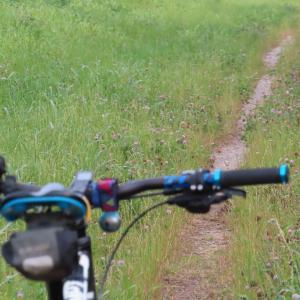 早朝自転車散歩〔定番コース〕