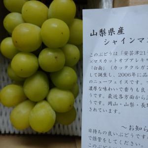 シャインマスカット(パイオラックス株主優待)