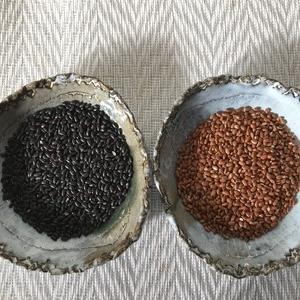 古代米の一種である赤米と黒米の比較~両者とも活性酸素を押さえる抗酸化力をもっている