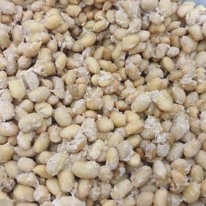 手作り納豆~タッパーと段ボールとホッカイロで作る