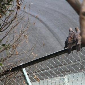 中国の野生動物取引による新感染症、「今後も頻繁に発生」 私の風邪は!?