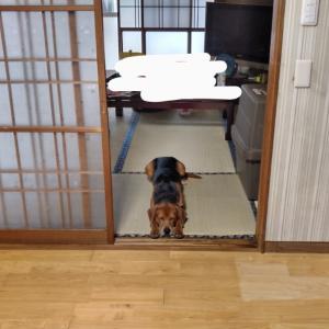 保護犬2匹目 3日目