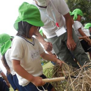 稲刈り わかば組 5歳児