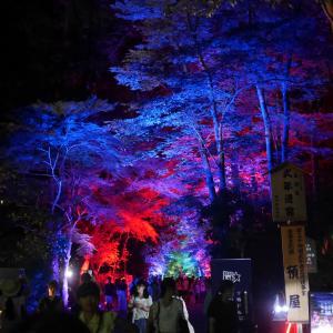 糺の森の光の祭(2016年夏 下鴨神社)