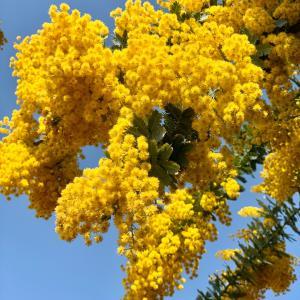 美しい 自然界の春カラー