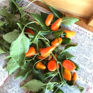 安曇野野菜は美味しいね!
