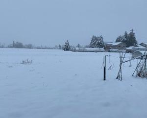 大雪警報だ!