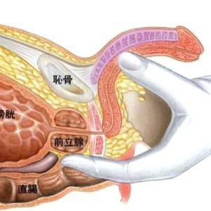 コロナウイルス禍を少しでも前向きに過ごす為の前立腺開発講習自主トレしましょ!の巻