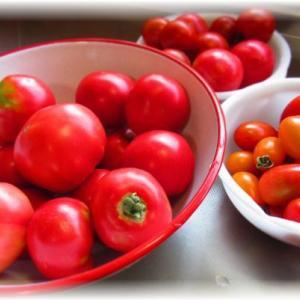 自家栽培トマトでトマトソース…♪