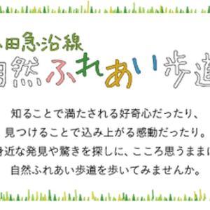 小田急沿線自然ふれあい歩道「第1エリア  新宿駅~向ヶ丘遊園駅」のまとめ