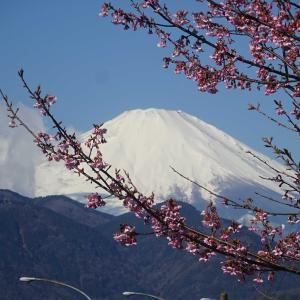 2020.02.27 松田山からの眺望とハーブの香りを味わって 小田急沿線自然ふれあい歩道3-40