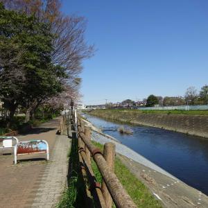 2020.03.25 公園と社寺の緑にオアシスを求めて 小田急沿線自然ふれあい歩道4-50