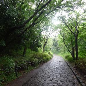 2020.07. 引地川沿いの大庭城址公園を訪ねて 小田急沿線自然ふれあい歩道4-56