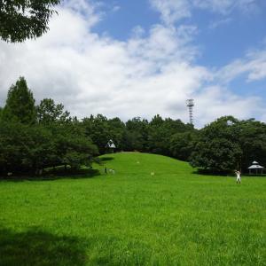 2020.08.02 雑木林の尾根道に自然を求めて 小田急沿線自然ふれあい歩道5-63