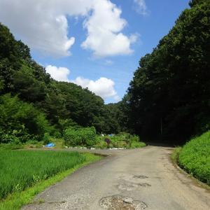 2020.08.02 里山に囲まれた田園風景との出会いを求めて 小田急沿線自然ふれあい歩道5-64