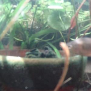ビオトープ水中動画