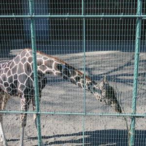 【旅打ち競艇@桐生(3回目)】桐生市を歩いて観光。織物記念館とか、意外とすごい入場無料の動物園とか。
