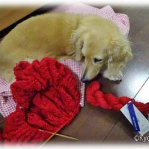 malabrigo laceでストール編み中