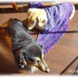 試し編み中