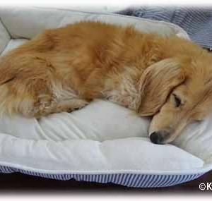 マロウはベッドが大好き