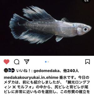 めだか交流会in愛媛のインスタグラム更新しました。5/14