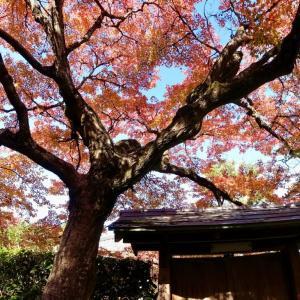 一休寺の紅葉