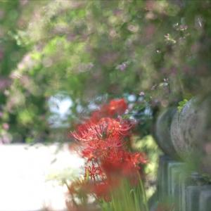 元興寺の萩と彼岸花