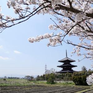 法起寺の桜