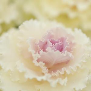 お花の撮影にはマクロレンズが必携ですね