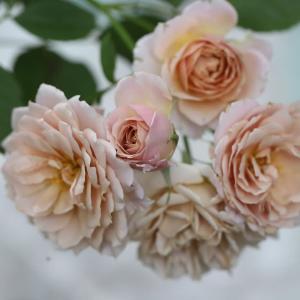 いおりの2番花と梅雨明け