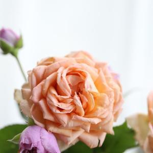 開花したアナエ