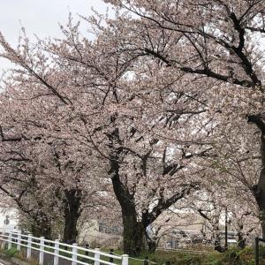桜 & 2020.3.31  今日はこんな日と占ってみた