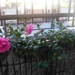 我が家を彩る花
