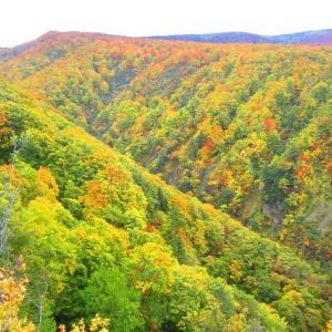 八甲田山 酸ケ湯周辺の紅葉を散策