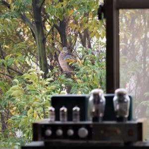 窓越しの隣人