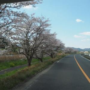 新型コロナで春は花見ドライブ