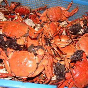 日本のツガニと中国の上海蟹