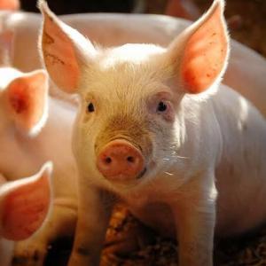 【搾取】ひろゆき「日本国民は肉屋を応援する豚」←だったら肉屋になればいい