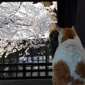 城址の風~令和二年桜紀行