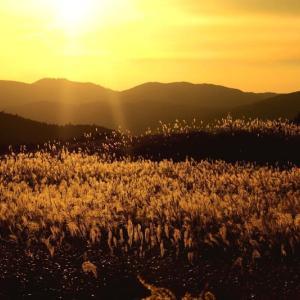 黄金色の景色