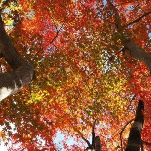 古都の秋 *京都*